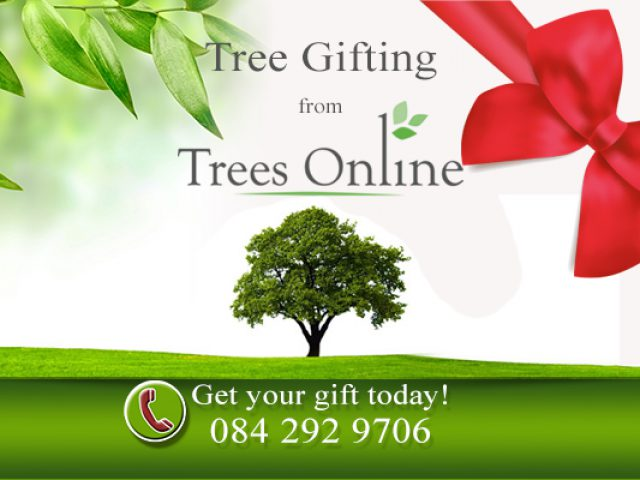 Tree Gifting – Trees Online